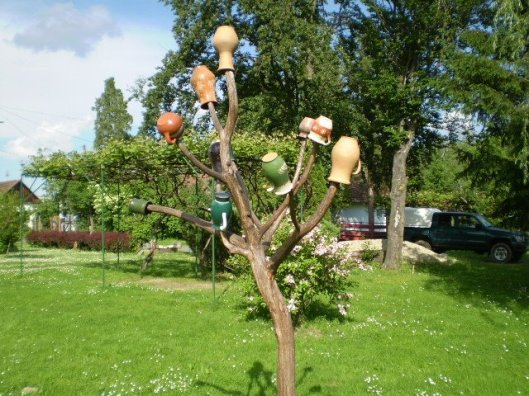 hungarian jug tree