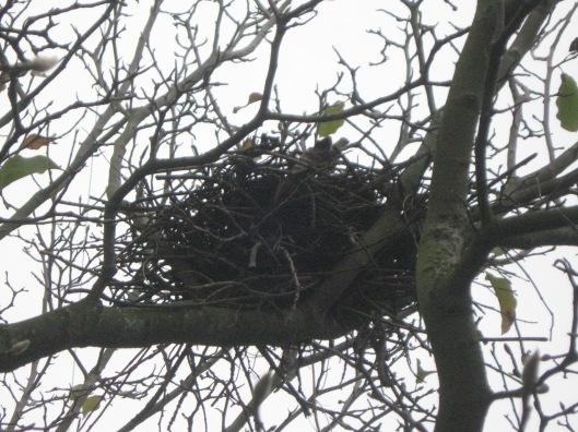 Crow's nest 012